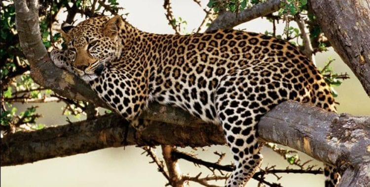 a-wildlife-spotting-tips