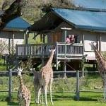 Safari West safari park