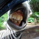 Taman Safari parks