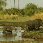 Chief's Island, Botswana