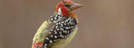 tanzania birdwatching-1