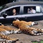 taman-bogor-safari